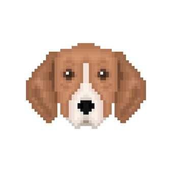Portrait of puppy great anglofrench tricolour hound
