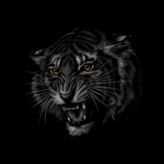 Portrait of a tiger head on a black background.  illustration