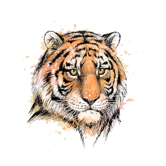 Portrait of a tiger head from a splash of watercolor, hand drawn sketch.  illustration of paints