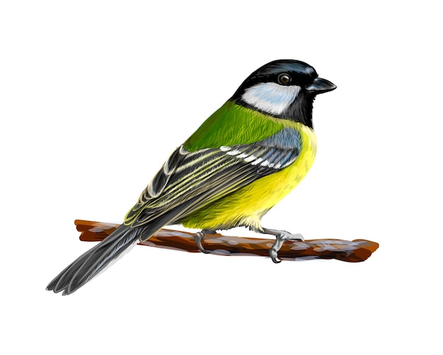 Portrait of a tit bird sitting on a branch on white background, hand drawn sketch.  illustration of paints
