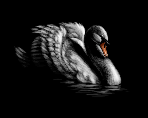 Portrait of a white swan on a black background.  illustration