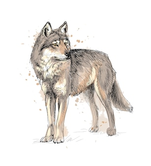 Portrait of a wolf from a splash of watercolor, hand drawn sketch.  illustration of paints