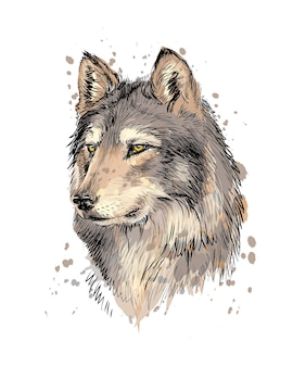 Portrait of a wolf head from a splash of watercolor, hand drawn sketch.  illustration of paints