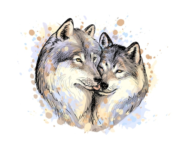 Portrait of wolves from a splash of watercolor, hand drawn sketch.  illustration of paints