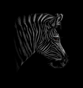 Portrait of a zebra head on a black background. vector illustration