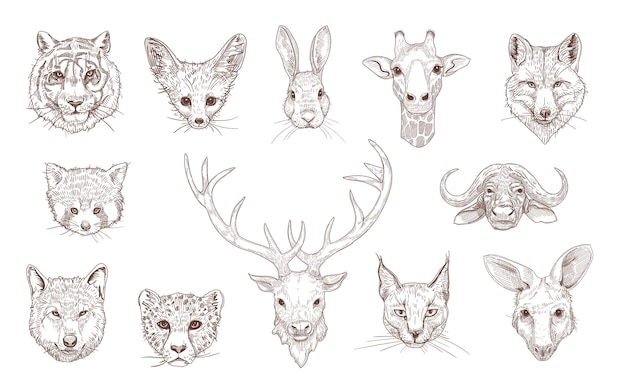 Portraits of different wild animals engraved illustrations set