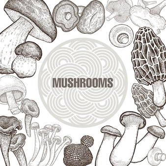Poster with variants of mushrooms.