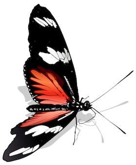 Почтальон бабочка heliconius melpomene