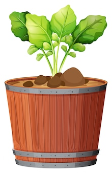 Pot plant with green leaves an isolated