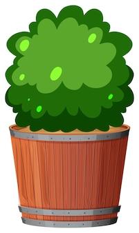 孤立した白い背景に緑の葉を持つ鉢植え
