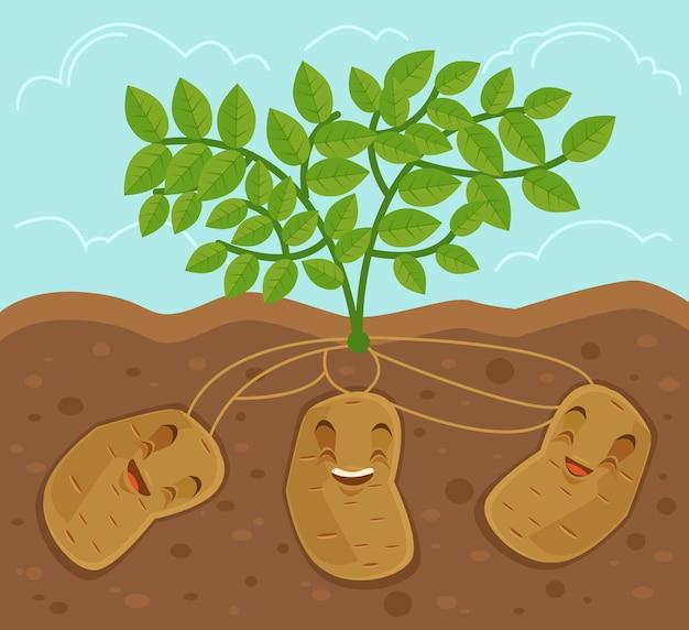 地下から育てられたジャガイモ