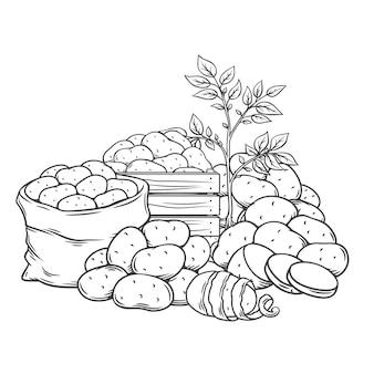 ジャガイモ塊茎の概要手描きモノクロイラスト