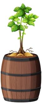 白い背景で隔離の木製の鍋に茎と葉を持つジャガイモ
