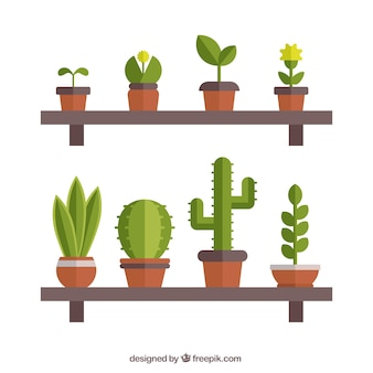 Pots on shelves in flat design