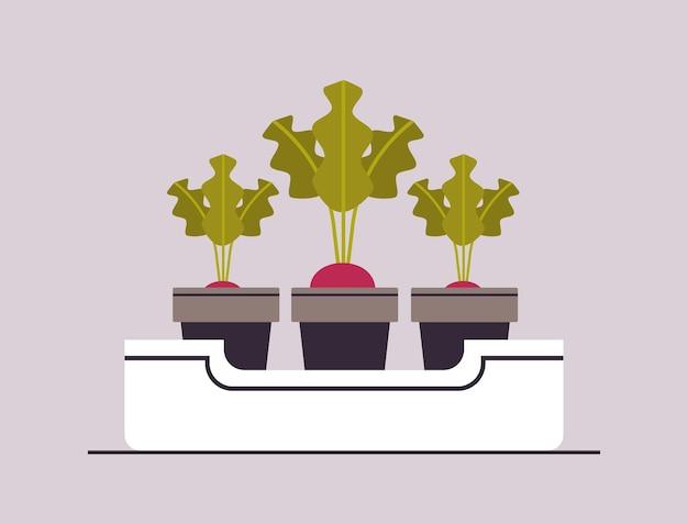 Potted beetroot or raddish plants in pots planting greenhouse botanical gegetable garden concept horizontal vector illustration