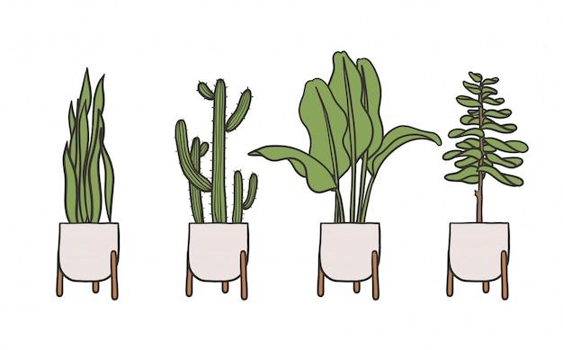 鉢植えの屋内植物シンプルなかわいいイラスト