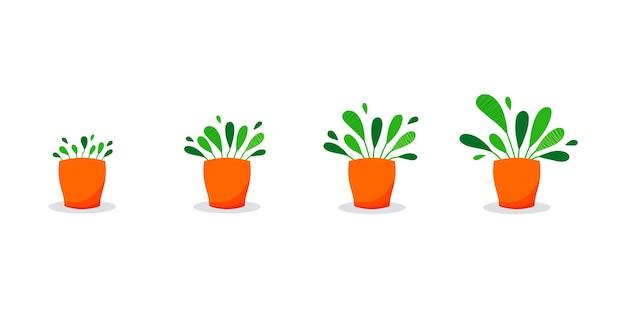 鉢植えの成長段階自家植物は鉢植えで着実に成長します小さな芽から青々とした葉まで