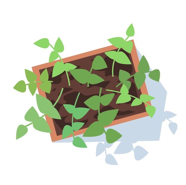 Комнатные растения полу плоские цвета rgb векторные иллюстрации. растущие листья на длинных стеблях. сбор урожая. декоративное комнатное растение. горшок изолированных мультфильм объект вид сверху на белом фоне