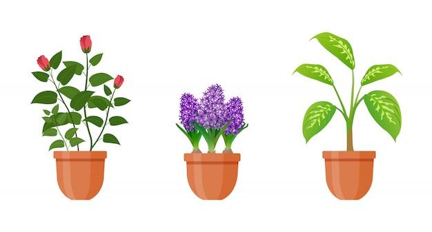 Растение в горшке. набор комнатных растений и цветов в горшке в плоском стиле. иллюстрации.
