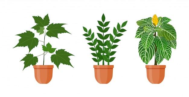 鉢植え。観葉植物とフラットスタイルの鍋の花のセットです。ベクトルイラスト。