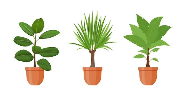 鉢植え。フラットスタイルの鉢植えの観葉植物と花のセットです。白い背景で隔離の屋内gerb。イチジク、ドラセナの花。インテリアガーデニングの装飾。