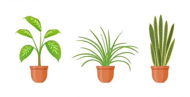 鉢植え。フラットスタイルの鍋の観葉植物のセットです。室内ガーベは、白い背景で隔離。サンセベリア、ディーフェンバッキア、クロロフィルタムの花。ガーデニングのインテリア。図。