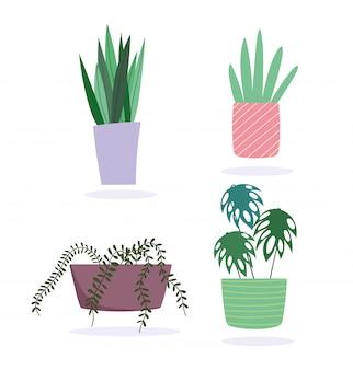 Горшечные растения украшения ботанический интерьер изолированный дизайн