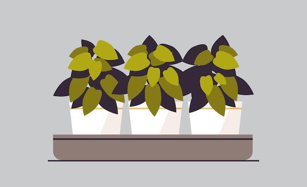 鉢植えの鉢植えの植物のハーブ温室植物園の概念ベクトル図を植える