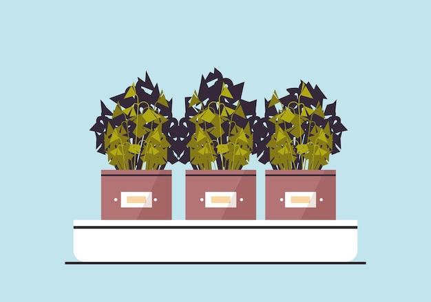 温室植物園の概念を植える鉢植えの鉢植えの植物ハーブ