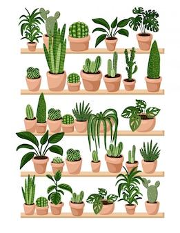 Горшечные сочные и кактусовые растения на полках в ряд открытку.