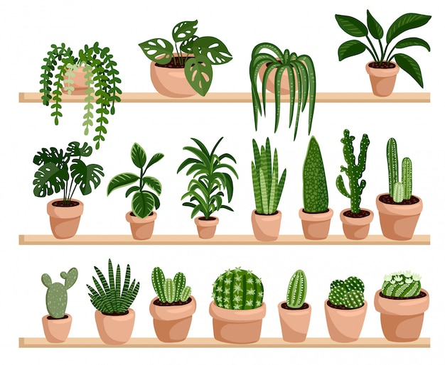 Potted succulent and cacti plants on shelves in a row postcard