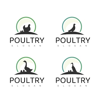 Poultry logo set with goose, duck, and hen symbol