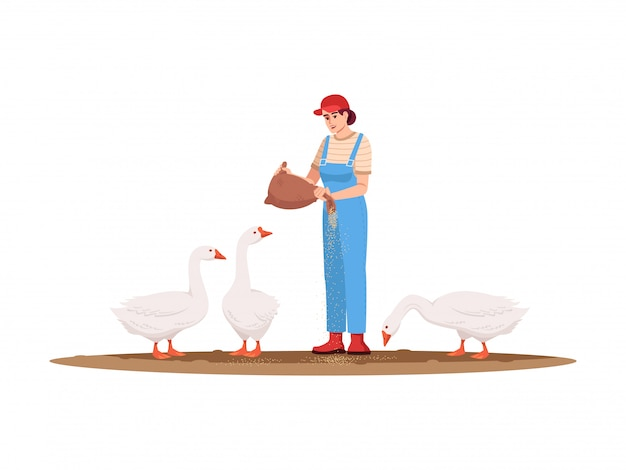 家禽牧場セミフラットrgbカラーイラスト。国産鳥の地産地消。ガチョウの餌をやる女。アメリカの農場。白い背景の上の女性農家分離の漫画のキャラクター