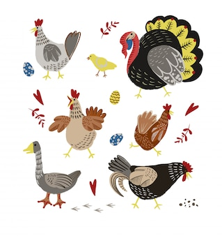 Poultry such as chicken, turkey and goose isolated.