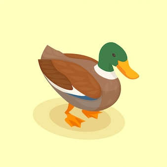 Poultry with colored duck isometric icon in cartoon style on yellow