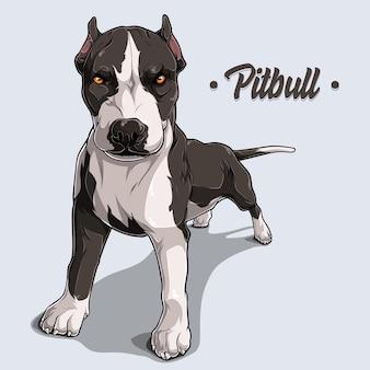白い背景で隔離の完全な長さで立っている強力な犬種ピットブル