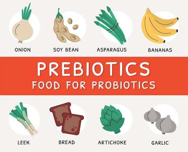 Prebiotic products, sources of bacteria