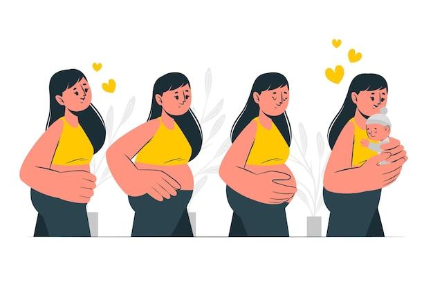 Illustrazione di concetto di fasi di gravidanza