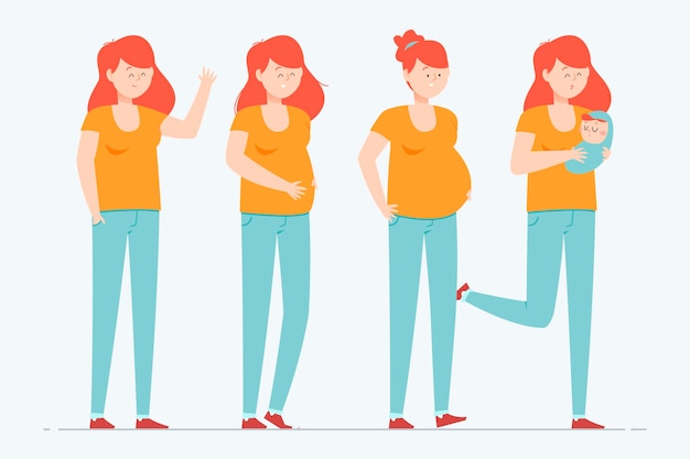 Pregnancy stages illustration