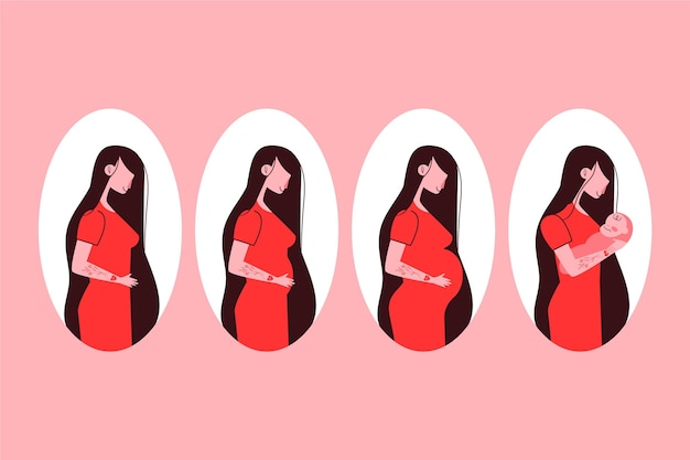 妊娠ステージセットの図解