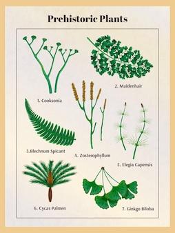 テキストのキャプションと孤立した画像で先史時代の植物植物セット