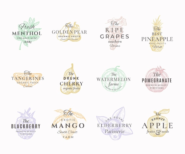 Premium qualituy fruits, berries and spices elegant labels set. abstract  signs, symbols or logo templates. hand drawn food sketches with retro typography. vintage emblems collection.