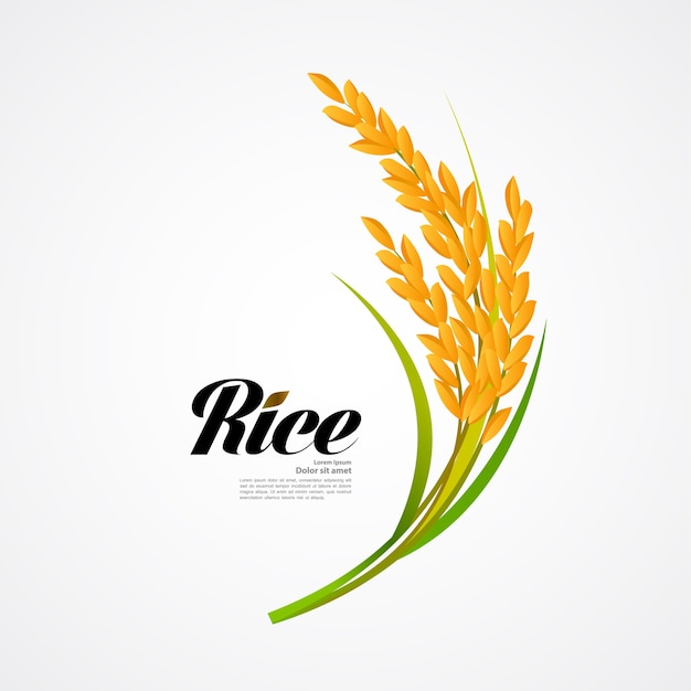 Premium rice great quality design concept