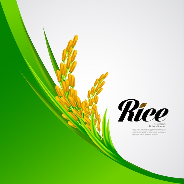 Premium rice great quality design   .