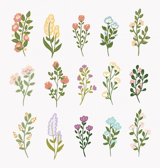 Pretty collection of flower floral flourish, illustration.