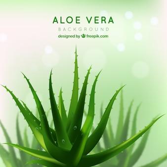 Pretty green background of aloe vera