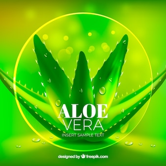 Pretty green bright background of aloe vera