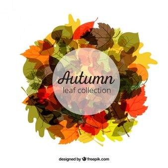 秋の色のかわいらしい葉