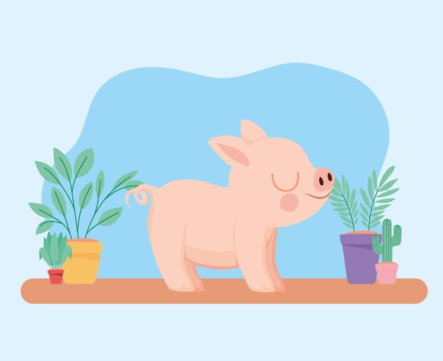 Pretty piggy representation
