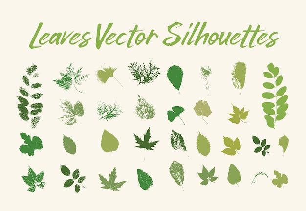Печать листьев деревьев. зелень флоры или растений